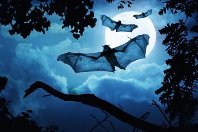 明德书院:为什么人不能吃蝙蝠,从传统文化来看原因竟然是这样